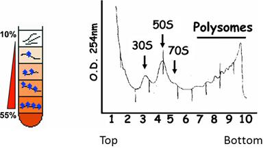 肽链结构式图片